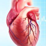Heart virtualdr 150x150 - نمیتوان «چاق» بود و «قلب سالم» هم داشت