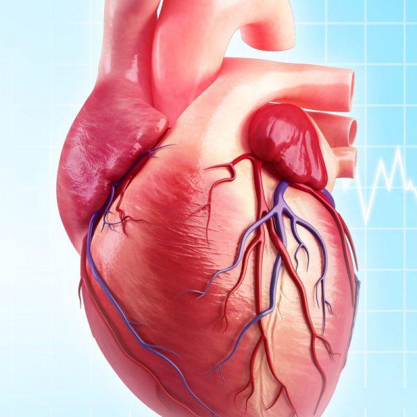 Heart virtualdr 600x600 - نمیتوان «چاق» بود و «قلب سالم» هم داشت