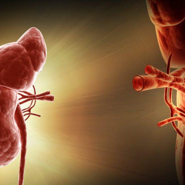 Transplantation 600x600 - انجام جراحی برای کاهش وزن، خطر نارسایی کلیوی را کم میکند